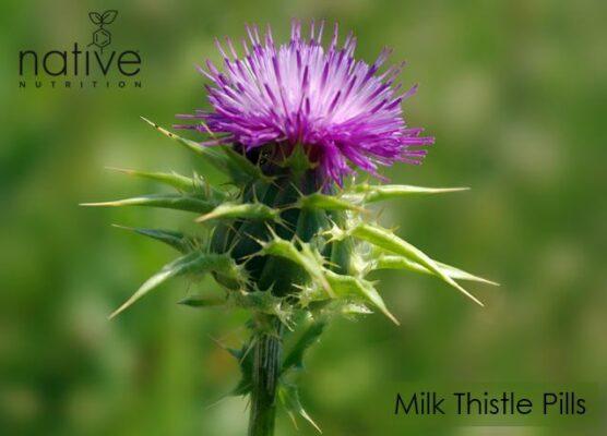 Milk Thistle Pills - native Nutrition